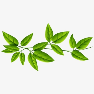Green Leaves Png Image Green Tea Leaves Transparent Background Transparent Cartoon Free Cliparts Silhouettes Netclipart