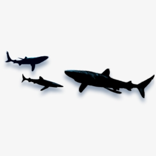 Graphic Free Library Fish Royalty Free Download - Shark