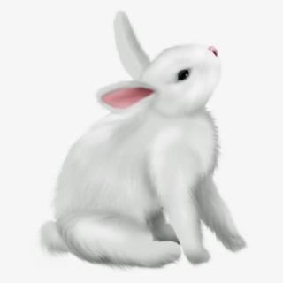 Free Snowshoe Hare Cliparts, Download Free Clip Art, Free Clip Art on  Clipart Library
