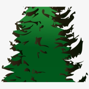 Christmas Holly Clipart Transparent.Fir Clipart Evergreen Tree Tree Silhouette Vector