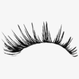 Png Eyelashes Cliparts Cartoons Free Download Netclipart