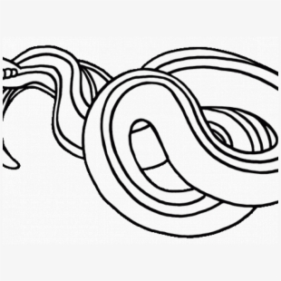 Snake Black And White Snake Clipart Black And White Line