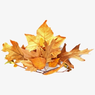 Png Pile Of Leaves Cliparts Cartoons Free Download Netclipart